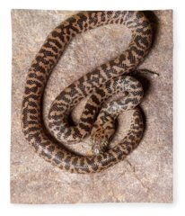 Spotted Python Antaresia Maculosa Top Fleece Blanket