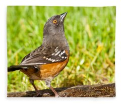 Spotted Towhee Looking Up Fleece Blanket