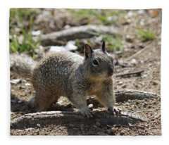 Squirrel Play  Fleece Blanket