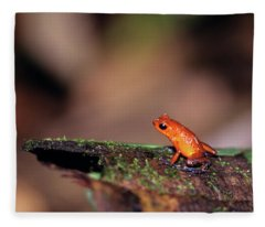 Strawberry Poison Dart Frog Dendrobates Fleece Blanket
