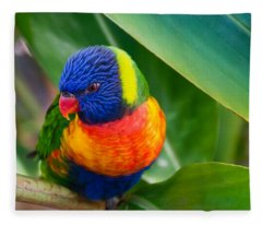 Striking Rainbow Lorakeet Fleece Blanket