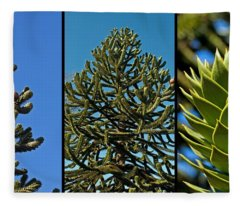 Study Of The Monkey Puzzle Tree Fleece Blanket