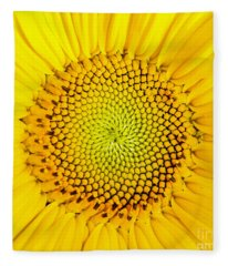Fleece Blanket featuring the photograph Sunflower  by Edward Fielding