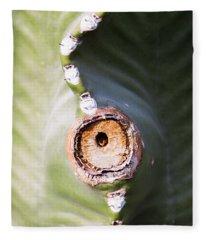 Sunlight Split On Cactus Knot Fleece Blanket