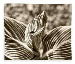Swirls And Stripes Fleece Blanket
