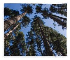 Talls Trees Yosemite National Park Fleece Blanket