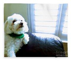 Teddy Fleece Blanket