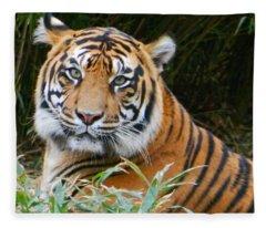 The Eyes Of A Sumatran Tiger Fleece Blanket