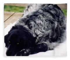 The Shaggy Dog Named Shaddy Fleece Blanket