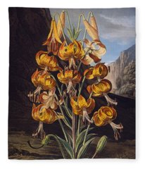 The Superb Lily, From The Temple Fleece Blanket