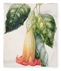 Thorn Apple Flower From Ecuador Datura Rosei Fleece Blanket