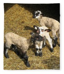 Three Little Lambs In Spring Sunshine Fleece Blanket