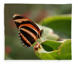 Tiger Striped Butterfly Fleece Blanket