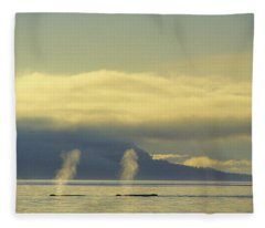 Tk0419, Thomas Kitchin Humpback Whales Fleece Blanket