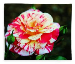 Two Colored Rose Fleece Blanket