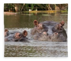 Two Hippopotamus Hippopotamus Amphibius Fleece Blanket