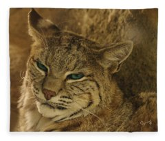 Wary Bobcat Fleece Blanket