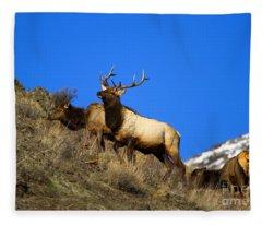 Watchful Bull Fleece Blanket