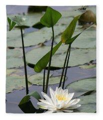 Water Lily In Bloom Fleece Blanket