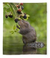 Water Vole Eating Blackberries Kent Uk Fleece Blanket