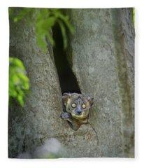 White-footed Sportive Lemur Lepilemur Fleece Blanket