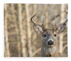 White-tailed Buck Fleece Blanket