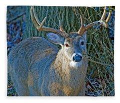 Whitetailed Deer Buck Animal Portrait Fleece Blanket