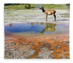 Wild And Free In Yellowstone Fleece Blanket