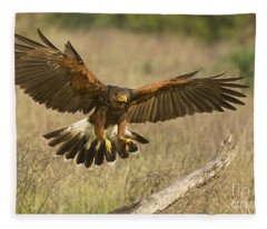 Wild Harris Hawk Landing Fleece Blanket