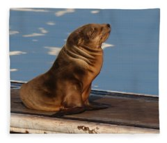 Wild Pup Sun Bathing - 2 Fleece Blanket