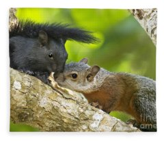 Wild Red-bellied Squirrels Interacting Fleece Blanket