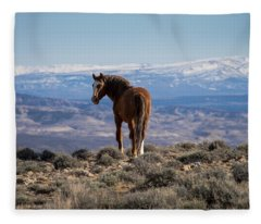 Wild Stallion Of Sand Wash Basin Fleece Blanket