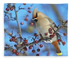 Winter Colors.. Fleece Blanket