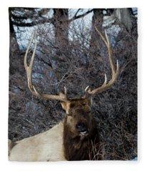 Wyoming Elk Fleece Blanket