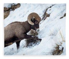 Yellowstone Bighorn Fleece Blanket