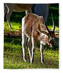 Youngster Addax Fleece Blanket
