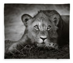 Young Lion Portrait Fleece Blanket