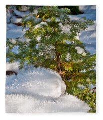 Young Winter Pine Fleece Blanket