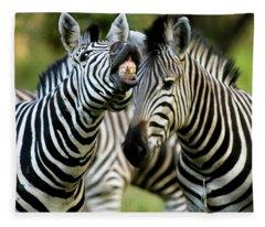 Zebra Showing Its Teeth, Equus Quagga Fleece Blanket