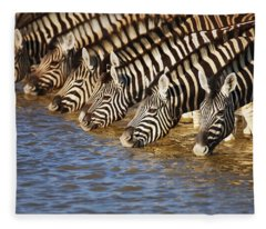 Zebras Drinking Fleece Blanket