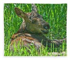 Baby Moose Fleece Blanket