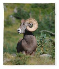 Big Horn At Goose Lake Fleece Blanket