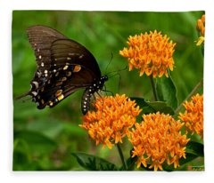 Black Swallowtail Visiting Butterfly Weed Din012 Fleece Blanket
