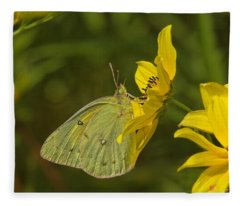 Clouded Sulphur Butterfly Din099 Fleece Blanket