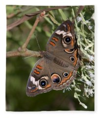 Common Buckeye Butterfly Din182 Fleece Blanket