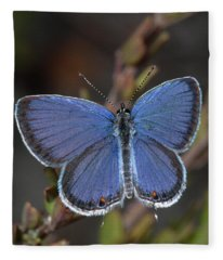 Eastern Tailed Blue Butterfly Fleece Blanket