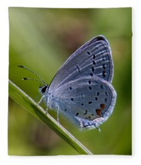 Eastern Tailed-blue Butterfly Din045 Fleece Blanket