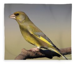 European Greenfinch Fleece Blanket