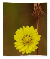 False Dandelion Flower With Wilted Fruit Fleece Blanket