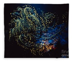 Flourescing Crinoid Fleece Blanket
